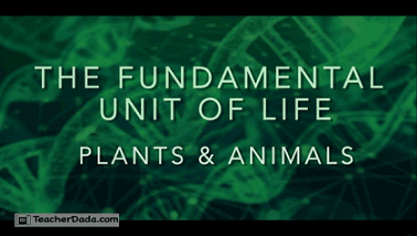 CBSE Science : The Fundamental Unit of Life-Cell for Class 9